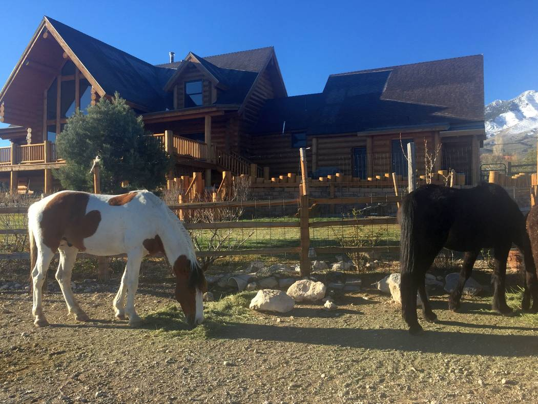 Wild horses come to the front of the home. (Mt. Charleston Realty)