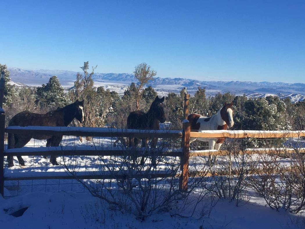 Wild horses at Cold Creek Canyon. (Mt. Charleston Realty)