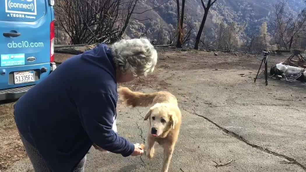 "In this Friday Dec. 7, 2018 image from video provided by Shayla Sullivan, ""Madison,"" the Anatolian shepherd dog that apparently guarded his burned home for nearly a month, approaches his owner, An ..."