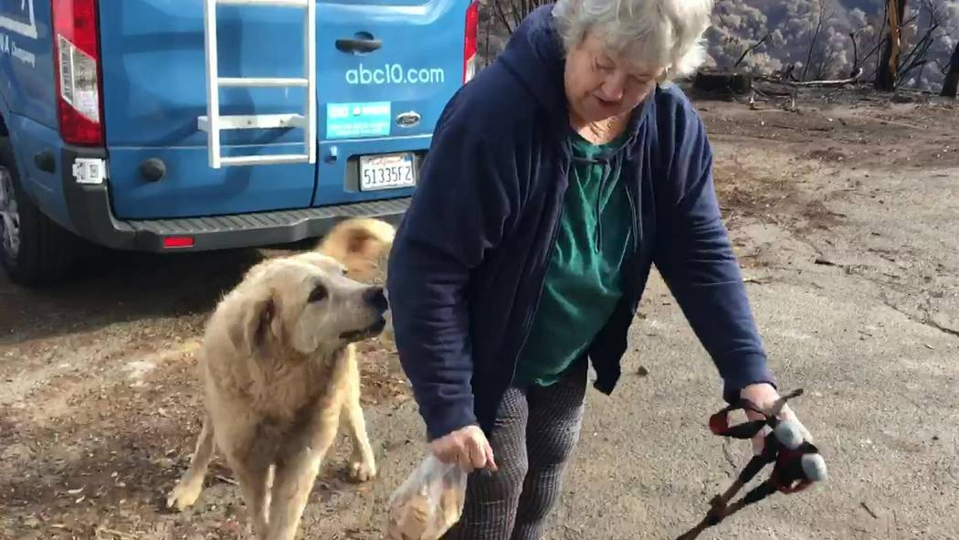 "In this Friday Dec. 7, 2018 image from video provided by Shayla Sullivan, ""Madison,"" the Anatolian shepherd dog that apparently guarded his burned home for nearly a month, greets his owner, Andrea ..."