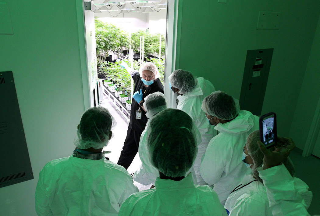 Jason Gully, chief operating officer of GreenMart of Nevada NLV LLC in North Las Vegas, shows the mother room during a tour of his facility to New Jersey lawmakers and cannabis industry officials ...
