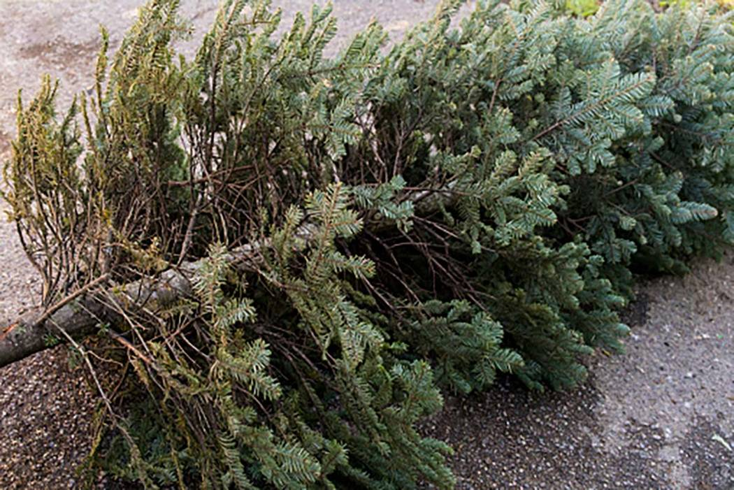 Henderson to offer free Christmas tree recycling | Las Vegas Review ...