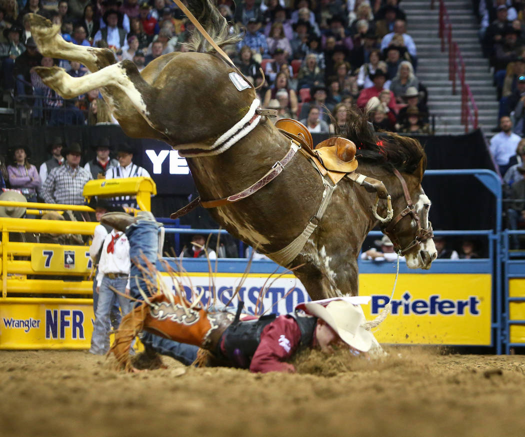 "Brody Cress of Hillsdale, Wyo. (32), falls off of ""OLS Tubs Little Muffin"" while competing in Saddle Bronc Riding during the sixth go-round of the National Finals Rodeo at the Thomas &am ..."