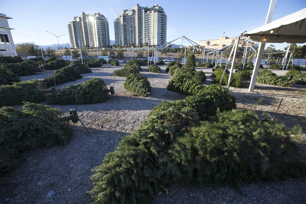 Toppled over Christmas trees are seen following heavy winds at Rudolph's Christmas Trees located at 510 S. Rampart Boulevard in Las Vegas on Wednesday, Dec. 12, 2018. Richard Brian Las Vegas Revie ...