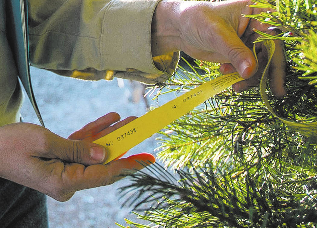 Cayenne Engel, a general biologist for the Nevada Division of Forestry employee, inspects for illegally harvested trees at Rudolph's Christmas Trees located at 510 S. Rampart Boulevard in Las Vega ...