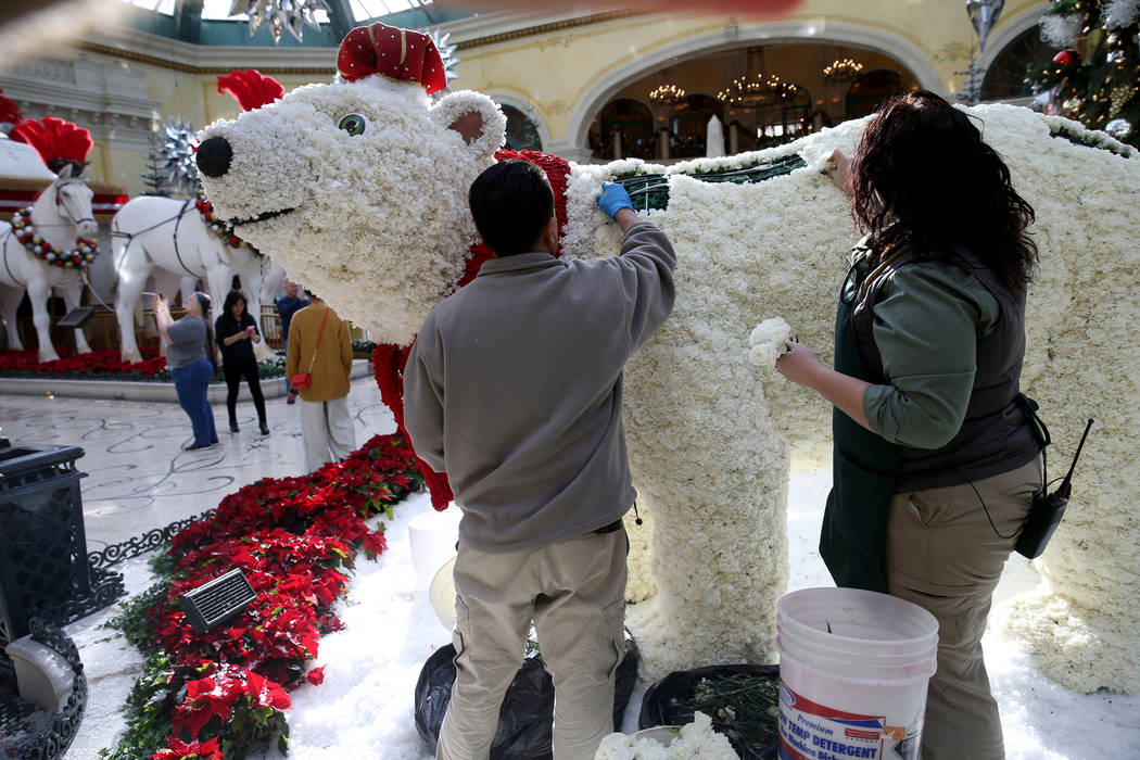 Conservatory gardeners Silvestre Calderon, left, and Alexa Tulowetzke load fresh flowers to Majestic Holiday Magic at the Bellagio Conservatory & Botanical Gardens in Las Vegas Friday, Dec. 21 ...