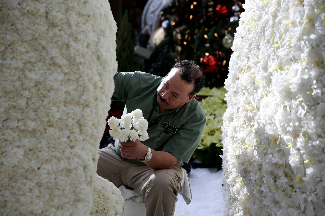 Conservatory gardener Luis Ruiz loads fresh flowers to Majestic Holiday Magic at the Bellagio Conservatory & Botanical Gardens in Las Vegas Friday, Dec. 21, 2018. The display will be up throug ...