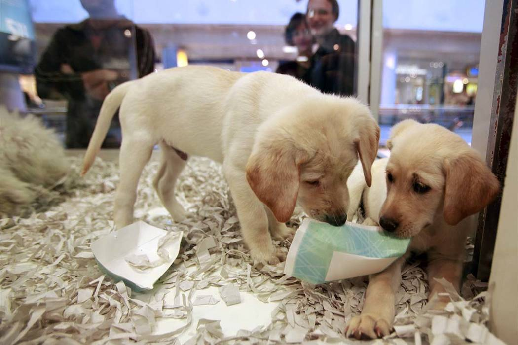 britain bans pet shops from selling puppies kittens las vegas review journal. Black Bedroom Furniture Sets. Home Design Ideas