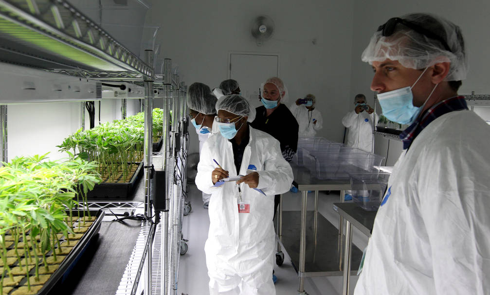 Beau Huch, right, chief of staff for Sen. Declan O'Scanlon, checks out clones during a tour of GreenMart of Nevada NLV LLC in North Las Vegas, with New Jersey lawmakers and cannabis industry offic ...