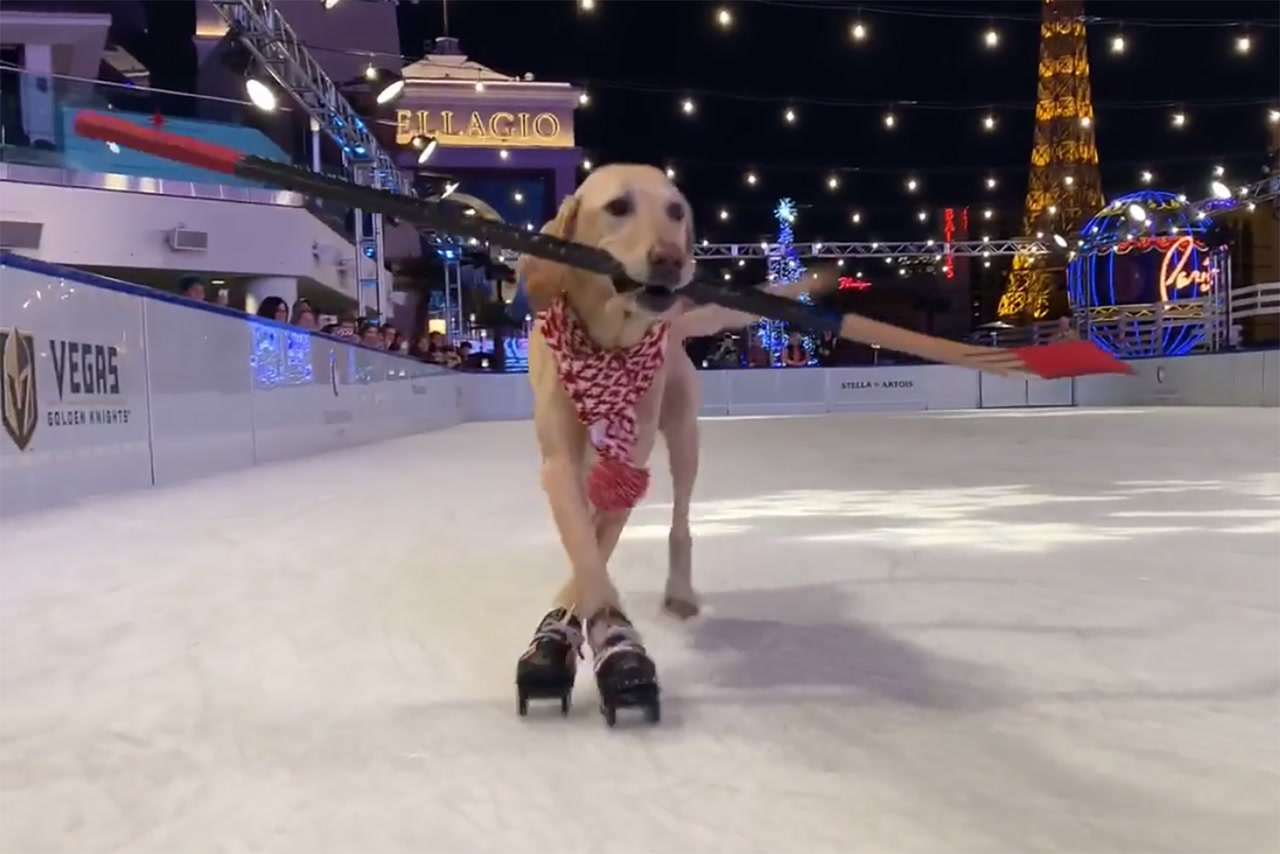 Ice Skates For Sale >> Benny the Ice Skating Dog hits the rink in Las Vegas ...