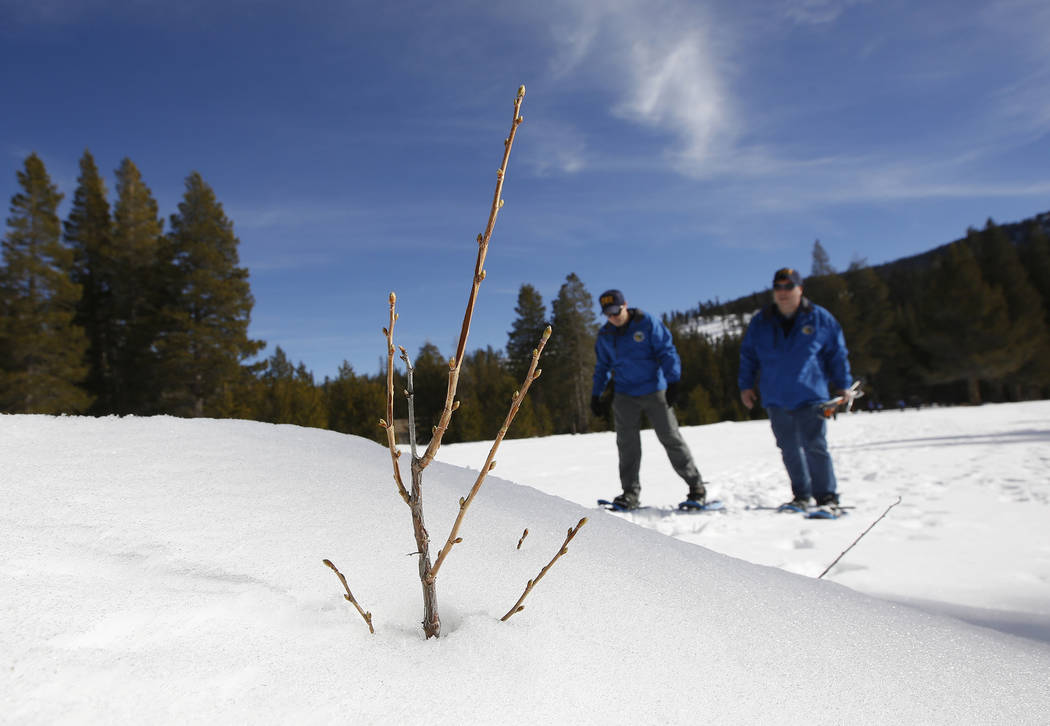A branch sticks up from the snow pack Department of Water Resources Water Resource Engineer John King, left, and DWR State Climatologist Dr. Michael Anderson, right, walk across a snow covered mea ...