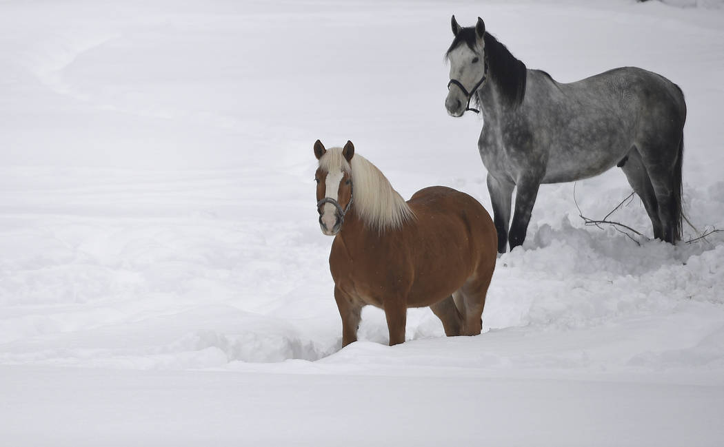 Horses stand in the snow in Garmisch-Partenkirchen, southern Germany, Monday. Jan. 7, 2019, after large parts of southern Germany and Austria were hit by heavy snowfall. (Angelika Warmuth/dpa vi ...