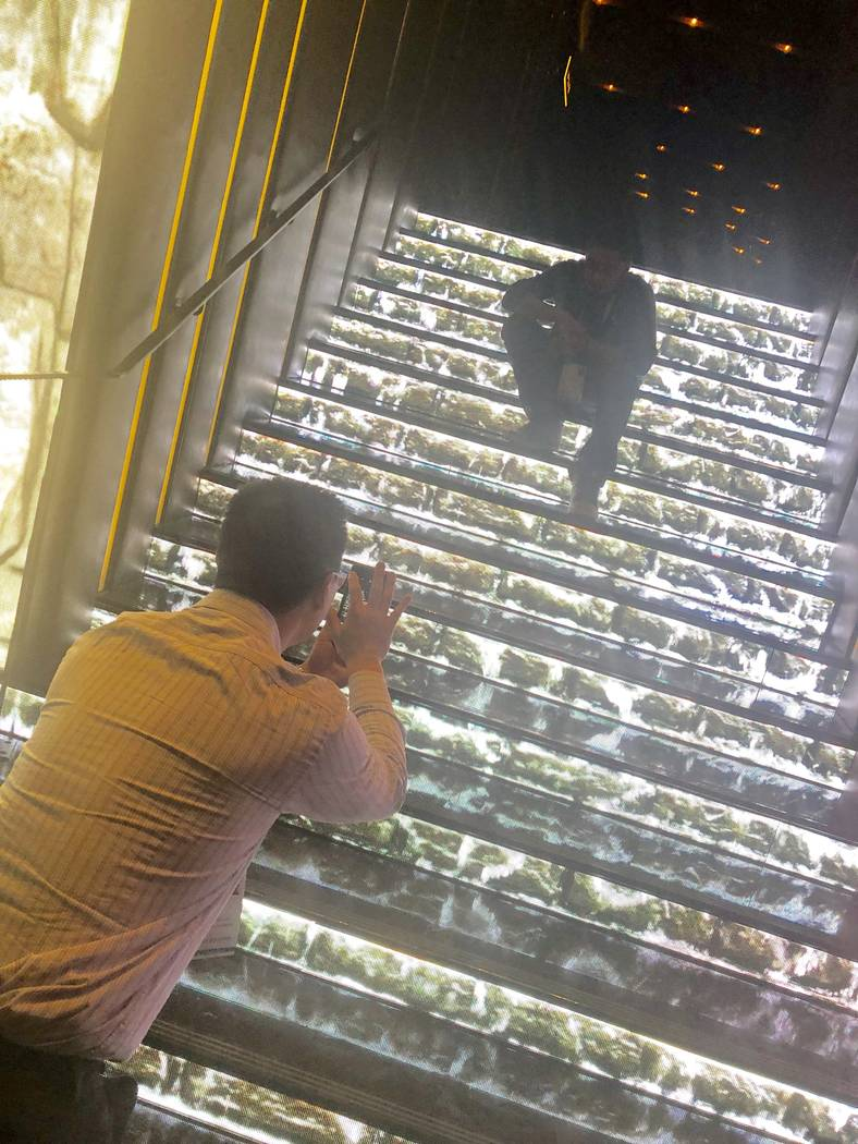 Conventioneer Kevin Chiu snaps a silhouette photo of his friend Avinash Mathews at the CES 2019 C Space Party presented by Jewel Nightclub at Aria in Las Vegas Monday, Jan. 7, 2019. John Katsilome ...