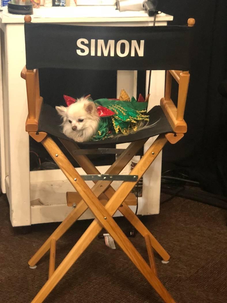 "Mr. Piffles, sidekick of Piff the Magic Dragon of Flamingo Las Vegas, is shown lounging backstage at ""America's Got Talent: The Champions"" on Monday, Jan. 7, 2019. (John Van der Put)"