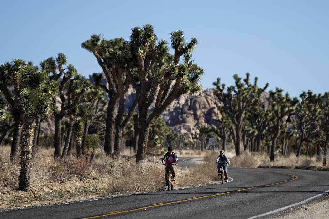 Two visitors ride their bikes along the road at Joshua Tree National Park in Southern California's Mojave Desert, Thursday, Jan. 10, 2019. The national park won't be closing because of the partial ...