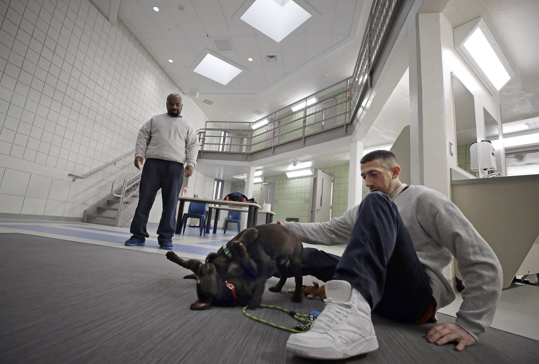 Inmates Justin Martin, right, and Jonathan Ladson, watch chocolate lab puppies play at Merrimack County Jail in Boscawen, N.H. on Jan. 8, 2019. The New Hampshire jail is the first in the state to ...