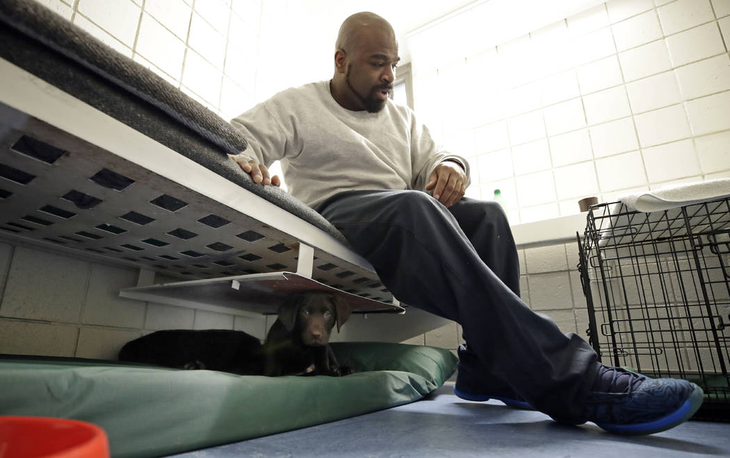 Inmate Jonathan Ladson sits in his cell with a chocolate lab puppy under his bed at Merrimack County Jail in Boscawen, N.H. on Jan. 8, 2019. The New Hampshire jail is the first in the state to par ...