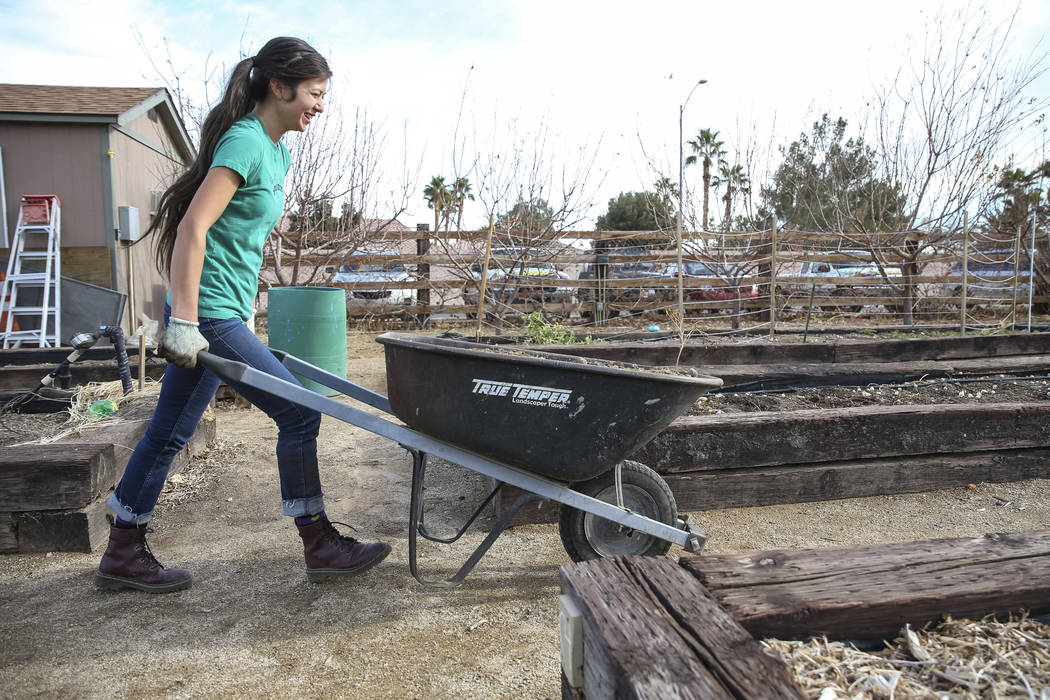 Garden Farms Foundation executive director Vanessa Portillo navigates a wheelbarrow with manure to a garden bed in preparation for early spring planting during a volunteering event at the San Migu ...
