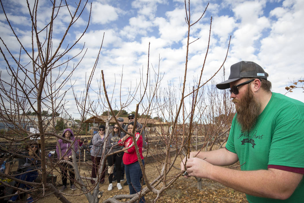 Garden Farms Foundation operations manager Bryan Cabble trims tree branches during a pruning demonstration at a volunteering event at the San Miguel Community Garden located at 3939 Bradley Road i ...