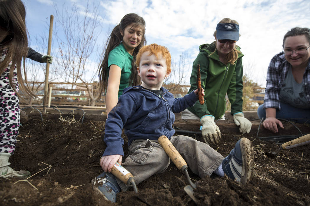One-and-a-half-year-old Wyatt Floyd holds up a carrot dug up in a garden bed during a volunteering event at the San Miguel Community Garden located at 3939 Bradley Road in Las Vegas on Saturday, J ...