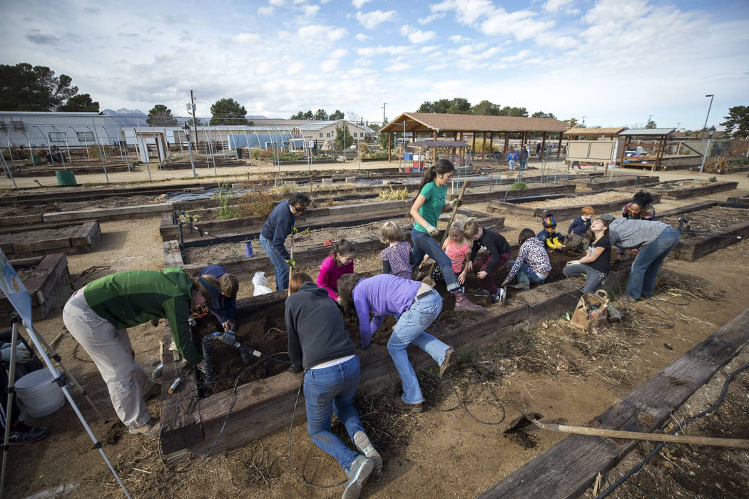 A group of volunteers helps to clean the soil in a garden bed in preparation for early spring planting during a volunteering event at the San Miguel Community Garden located at 3939 Bradley Road i ...