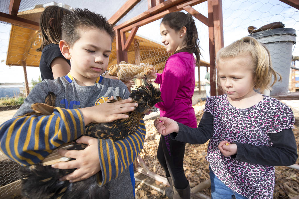 Jacob Anderson, 5, from left, Rebecca Anderson, 9, and Summer Hunsaker, 6, visit with Polish chickens, a European breed of chickens known for its crest of feathers, in a coop during a volunteering ...