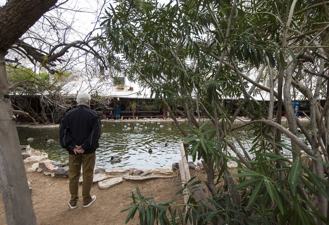 A visitor looks at a pond at Bonnie Springs Ranch outside of Las Vegas on Saturday, Jan. 12, 2019. The ranch is under contract to be sold and demolished for luxury home lots. Chase Stevens Las Veg ...