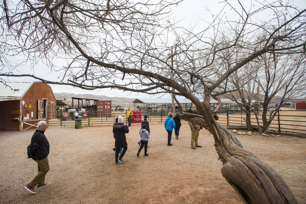 Visitors walk around the Red Rock Riding Stables at Bonnie Springs Ranch outside of Las Vegas on Saturday, Jan. 12, 2019. The ranch is under contract to be sold and demolished for luxury home lots ...