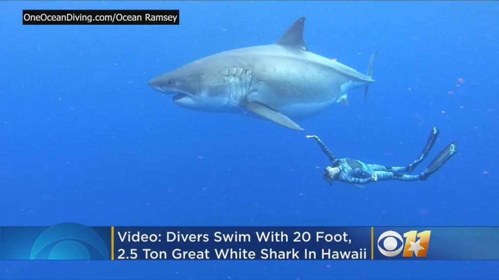 Great White Shark Sighting Might Be Legendary Deep Blue