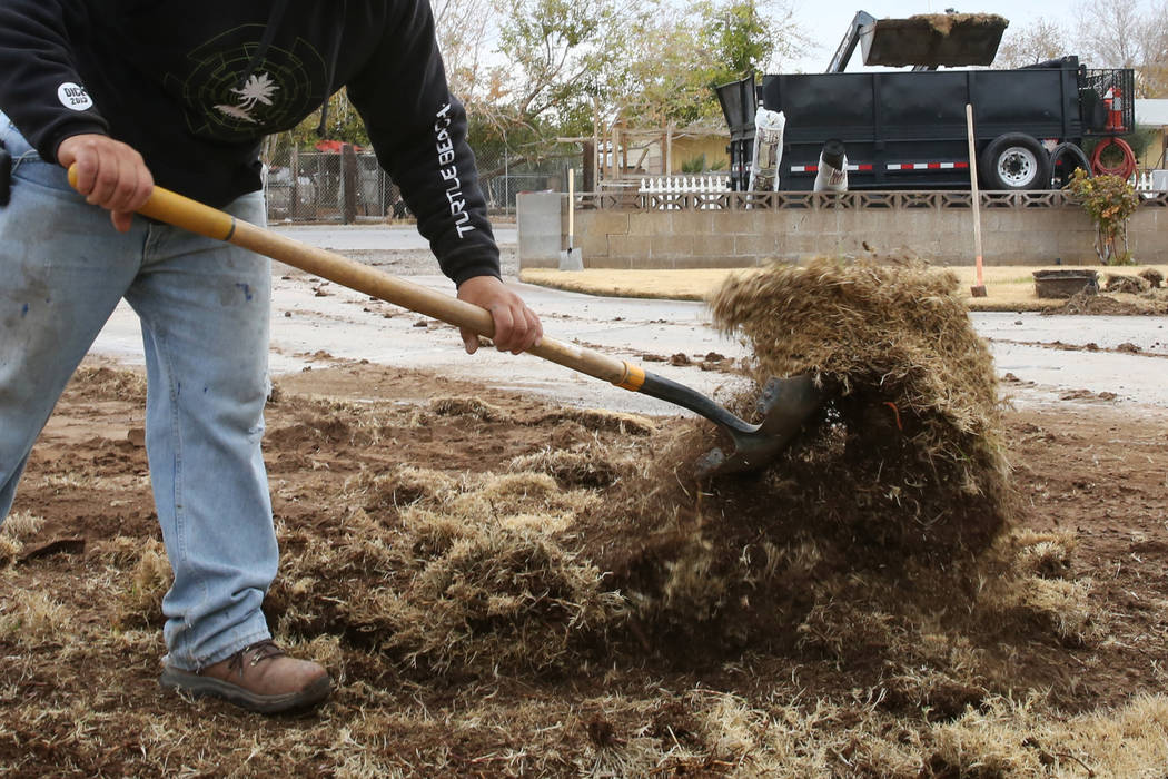 Pacas Rivera of North West Landscape, removes old lawn from Mary Kiosowski Lewis', not photographed, front yard on Monday, Dec. 10, 2018. Bizuayehu Tesfaye Las Vegas Review-Journal @bizutesfaye