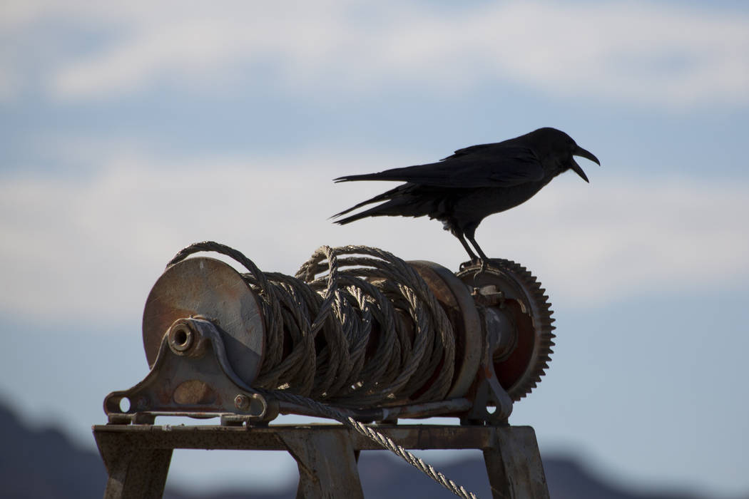 A bird perches on the remnants of some boating equipment near Lake Mead Marina at Lake Mead National Recreation Area on Sunday, Oct. 14, 2018. Richard Brian Las Vegas Review-Journal @vegasphotograph