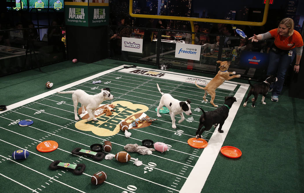 Atmosphere at the Puppy Bowl X at the Discovery Times Square Experience in New York on Tuesday, Jan. 28, 2014. (Mark Von Holden/AP Images for Discovery Communications)