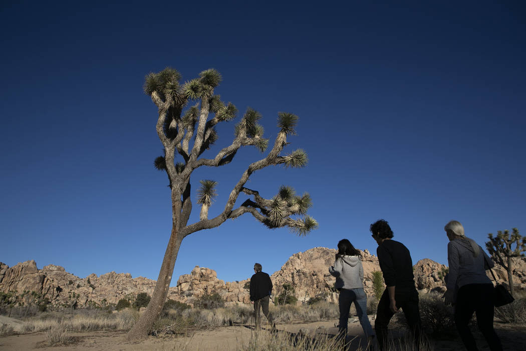 People visit Joshua Tree National Park in Southern California's Mojave Desert, Thursday, Jan. 10, 2019. The National Park Service said it's freed enough money from recreation fees to prevent the c ...
