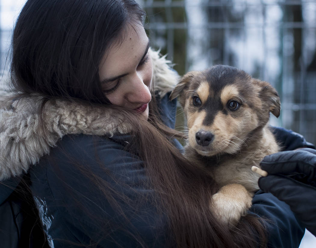 A potential pet owner looks at a stray dog at a shelter in Vilnius, Lithuania on Friday, Feb. 1, 2019. A group of animal enthusiasts in Lithuania have created the GetPet mobile app inspired by the ...