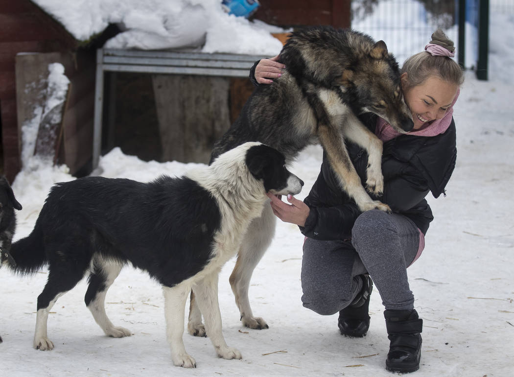 Ilona Reklaityte, founder of a dog shelter, copes with two of her charges in Vilnius, Lithuania on Thursday, Jan. 31, 2019. A group of enthusiasts have launched an app that helps match aspiring do ...