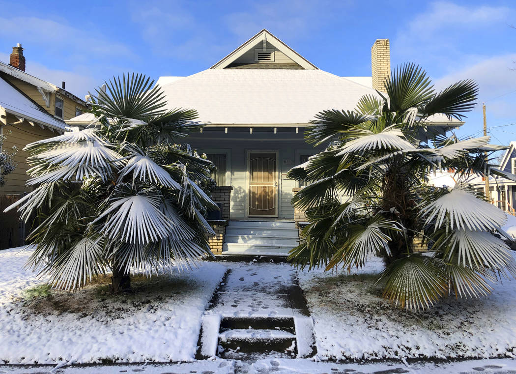 Fan palms are covered with a layer of snow in the front yard of a home in Portland, Ore., after a winter storm overnight brought light snow and icy conditions to the Portland metropolitan region. ...