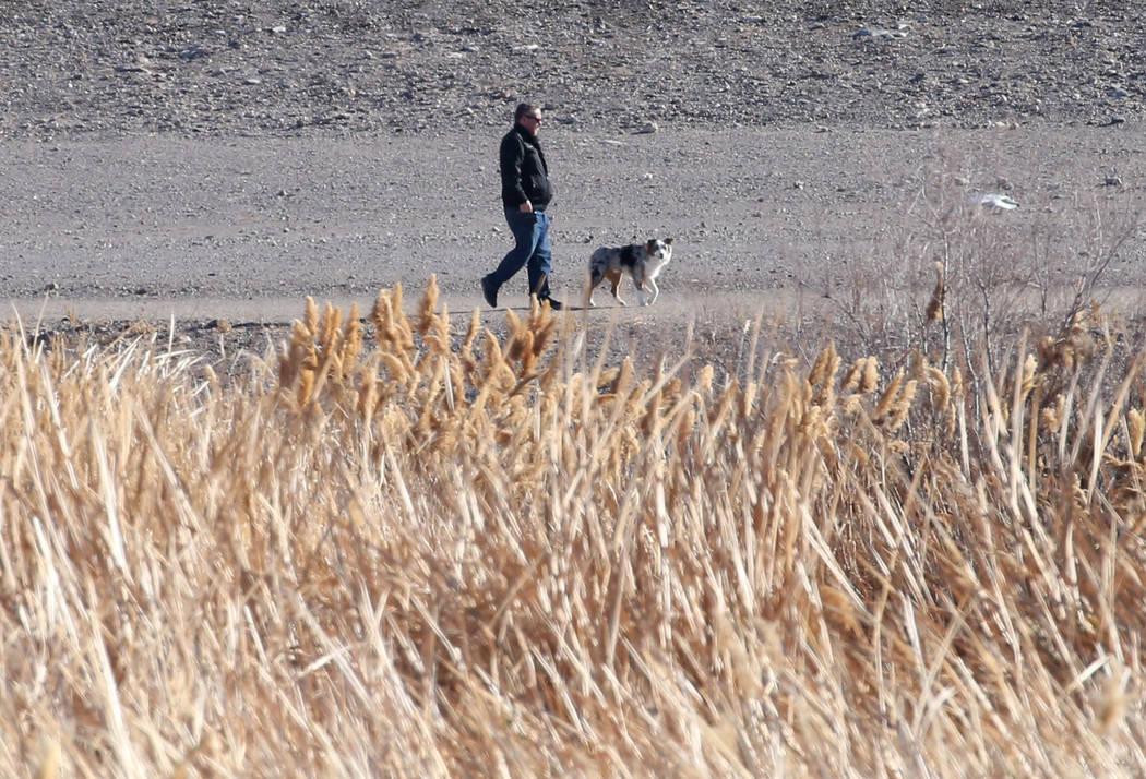 A man walks his dog during a cold morning at Cornerstone Park on Wednesday, Feb. 6, 2019, in Henderson. (Bizuayehu Tesfaye/Las Vegas Review-Journal) @bizutesfaye