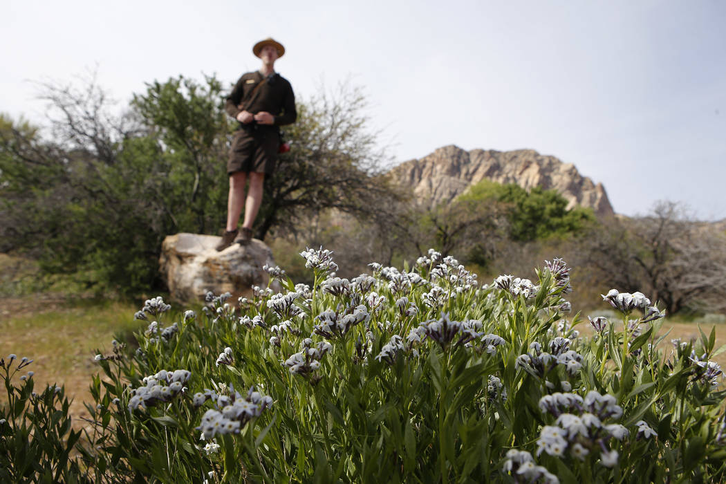 Park Interpreter David Low speaks about amsonia bushes, foreground, during a hiking tour that he is leading at the Spring Mountain Ranch State Park on Sunday, April 9, 2017, in Blue Diamond, Nevad ...