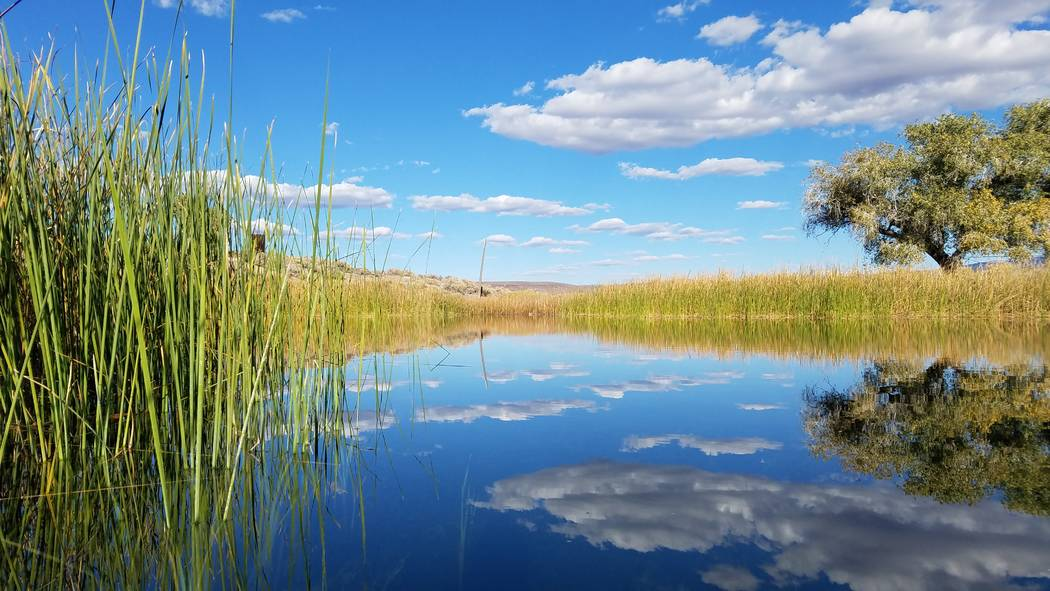 Clouds reflect in the surface of a pond at the 7J Ranch northeast of Beatty on Oct. 31, 2018. Martin Swinehart The Nature Conservancy