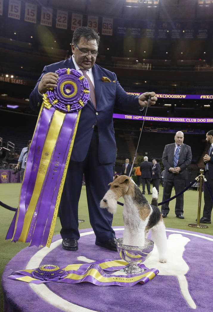 Gabriel Rangel poses for photographs with King, a wire fox terrier, after King won Best in Show at the 143rd Westminster Kennel Club Dog Show on Tuesday, Feb. 12, 2019, in New York. (AP Photo/Fran ...