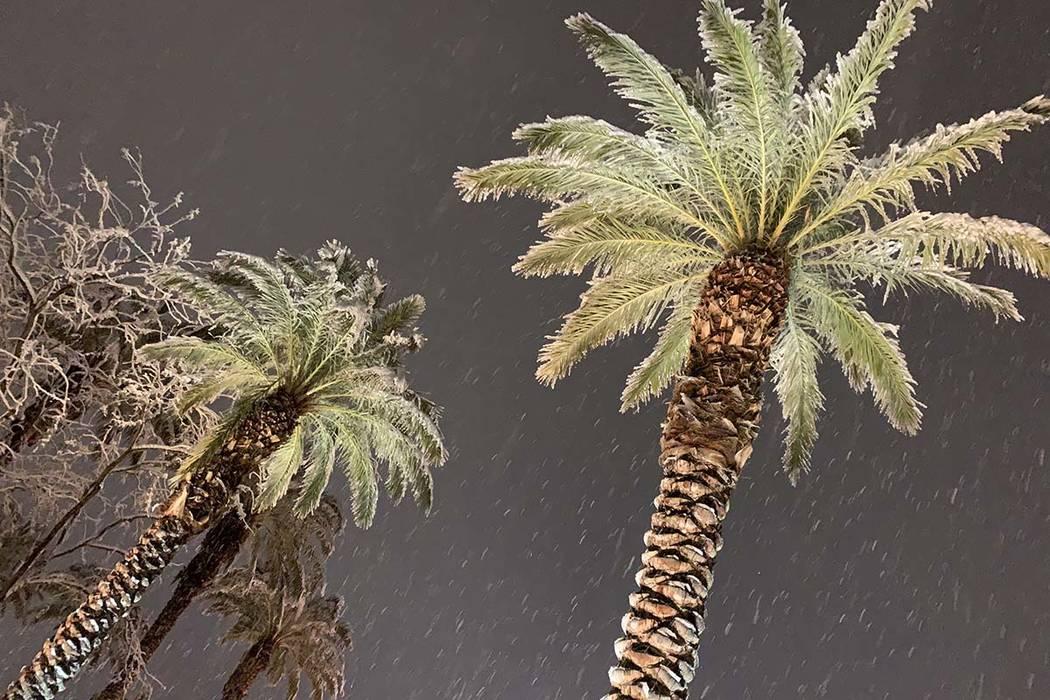 Snow falls at Red Rock Resort on Thursday, Feb. 21, 2019. (Mat Luschek/Las Vegas Review-Journal)