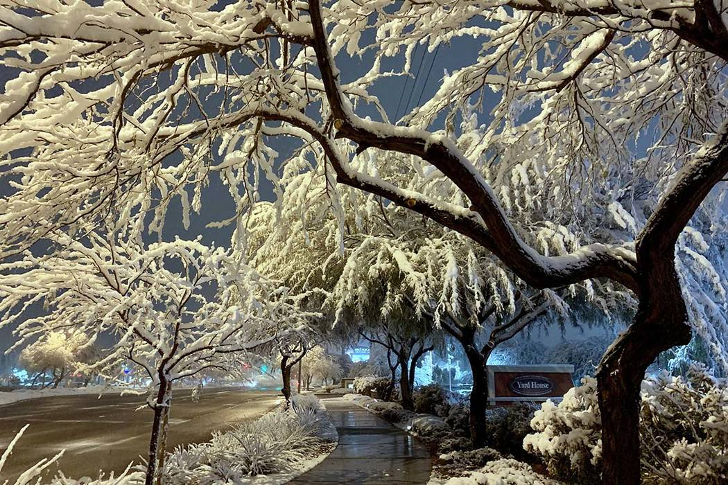 Heavy, wet snow clings to trees in outside Red Rock Resort in Summerlin on Thursday, Feb. 21, 2019. (Mat Luschek/Las Vegas Review-Journal)