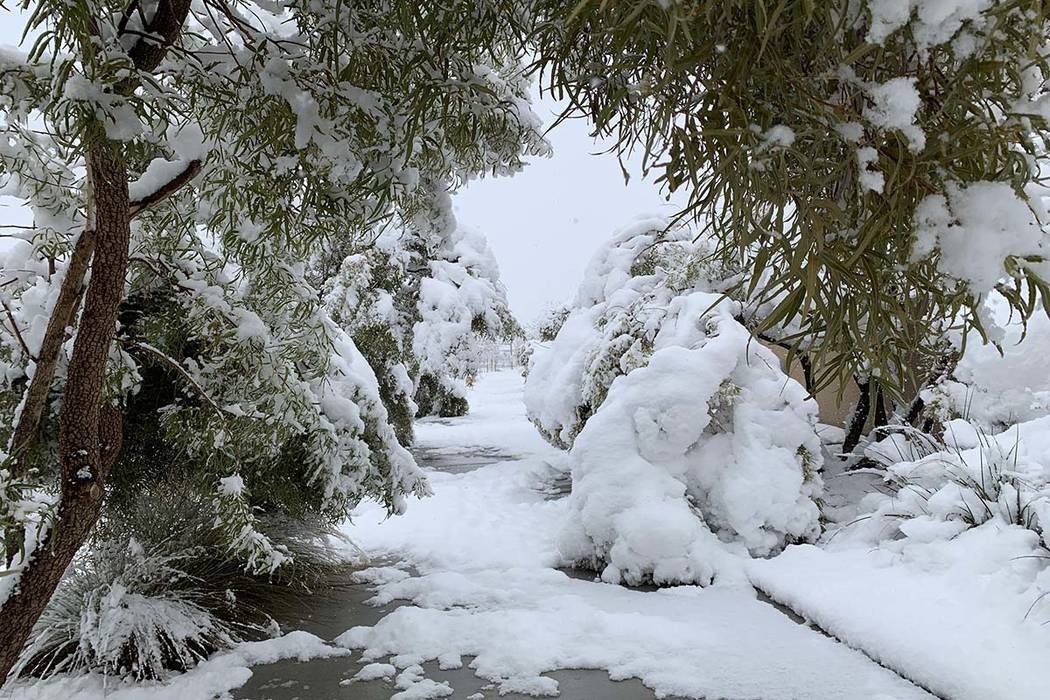 Snow weighs down tree branches near Desert Foothills Drive near Alta Drive in western Las Vegas, Thursday, Feb. 21, 2019. (Mat Luschek/Las Vegas Review-Journal)