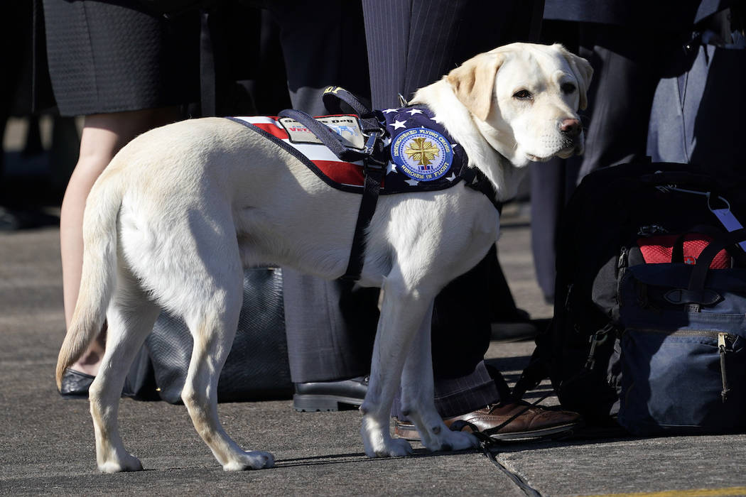 Sully, the yellow Labrador retriever who was former President George H.W. Bush's service dog, stands next to Bush family members during a departure ceremony at Ellington Field Monday, Dec. 3, 2018 ...