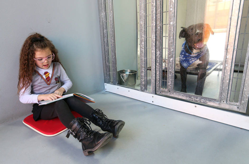 CCSD first grader Aubrey Haws, 6, participates in the 4th Annual ÔReading to Dogs in KennelsÕ event at The Animal Foundation during Nevada Reading Week in Las Vegas, Thursday, Feb. 28, 2 ...