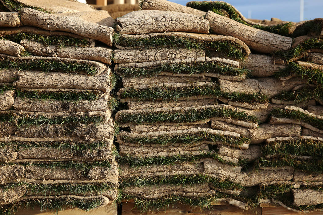 Pallets of sod are displayed at Star Nursery on Tuesday, March 5, 2019, in Henderson. (Bizuayehu Tesfaye Las Vegas Review-Journal) @bizutesfaye