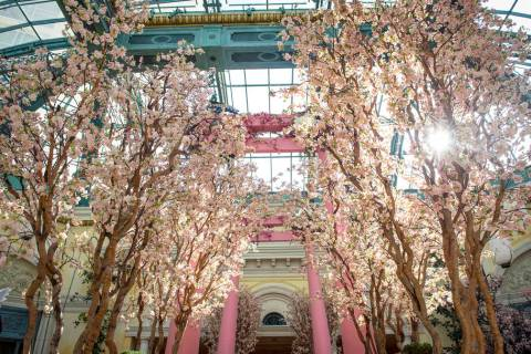 The Bellagio showcases its spring display at the Bellagio Conservatory & Botanical Gardens in L ...