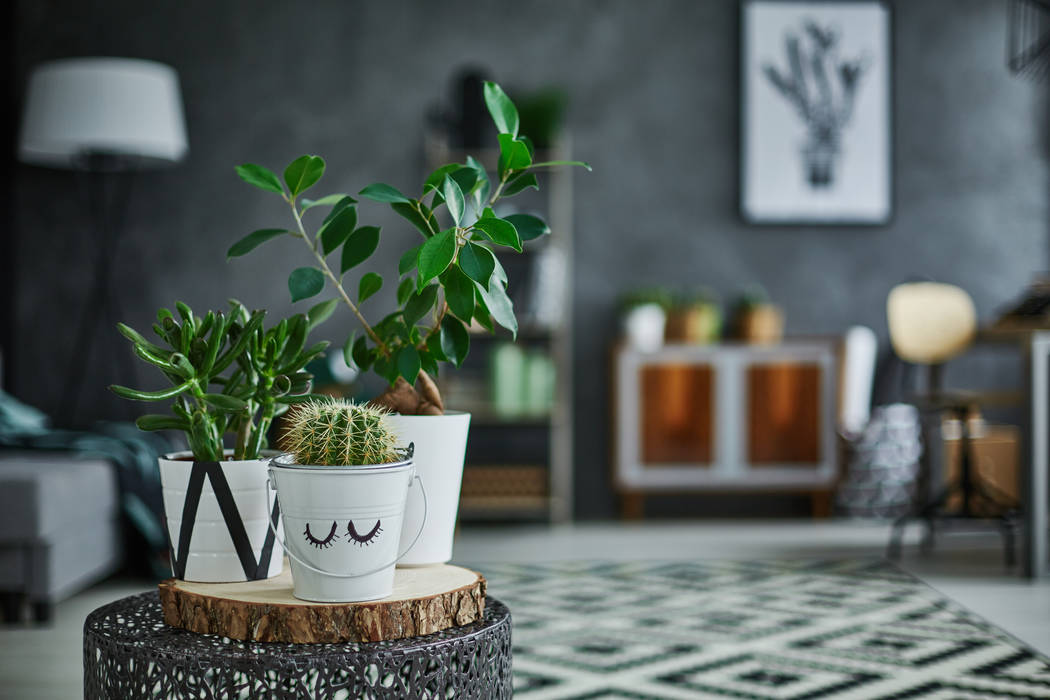 Cacti and succulents make good houseplants as long as owners don't overwater them. (Getty Images)