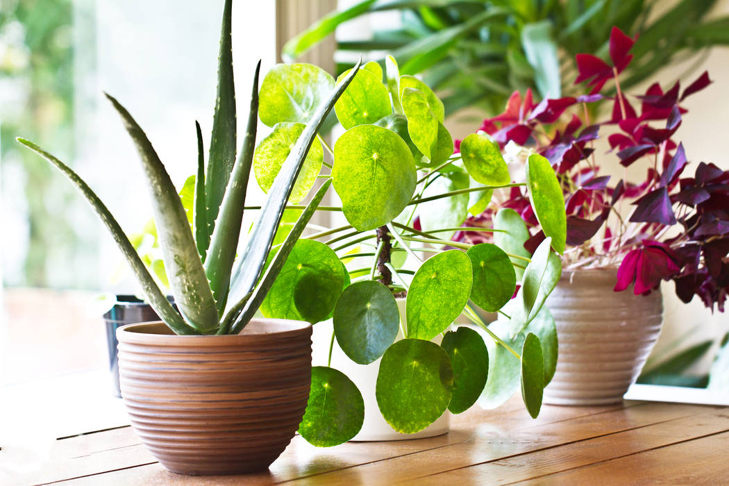 Houseplants come in a variety of shapes, sizes and colors. (Getty Images)