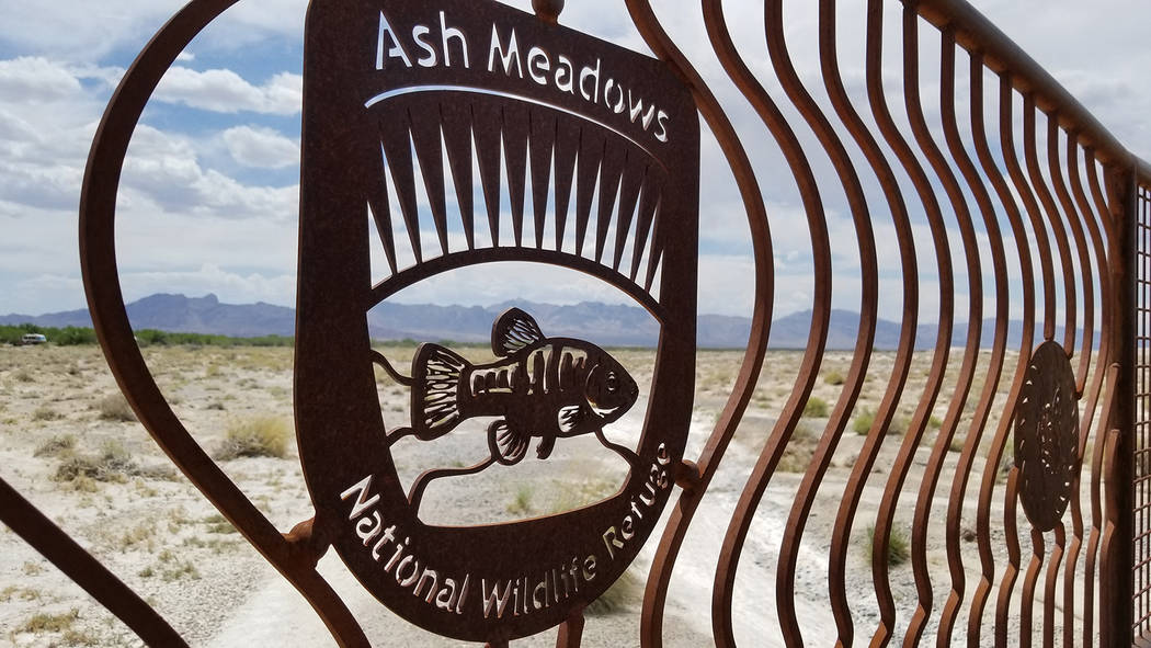 Ash Meadows National Wildlife Refuge is a rare oasis of spring-fed desert wetlands about 100 miles away from Las Vegas on the way to Death Valley National Park. There are more than 25 endemic spec ...